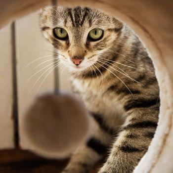 Top rascadores para gatos por menos de 35€