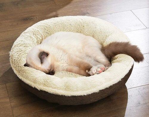 Feandrea sofá para perro